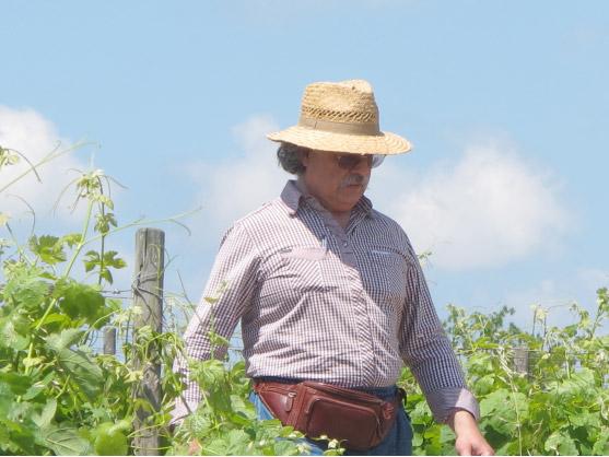 Les estivales au vignoble du Domaine d'Anglas